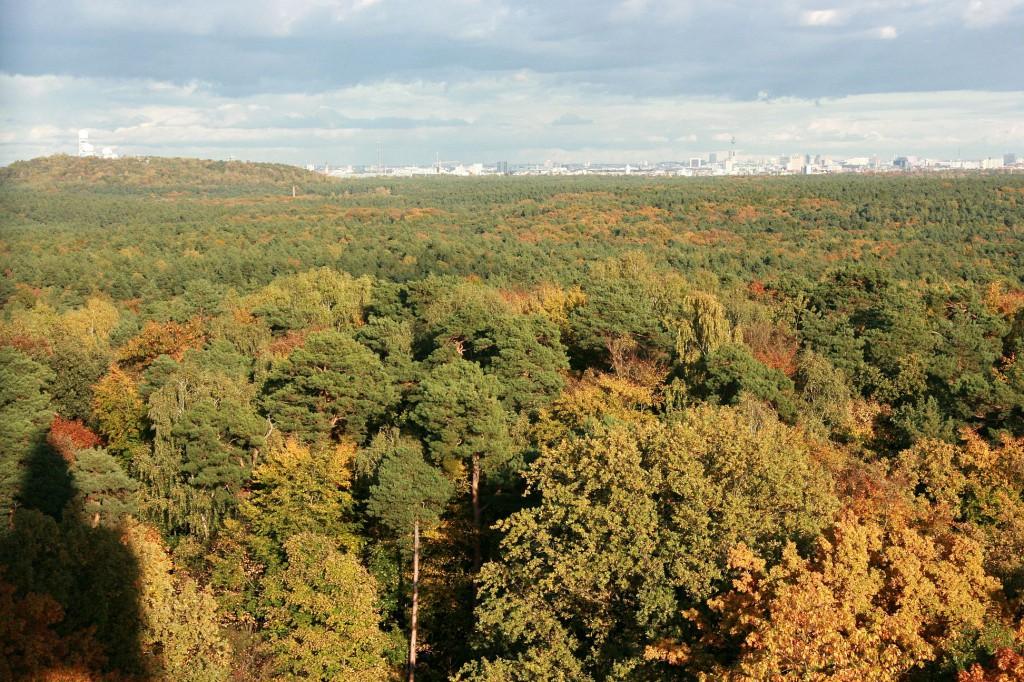 """Der berühmte Berliner Grunewald, """"Waldgebiet des Jahres 2015"""" (Quelle: BDF)"""